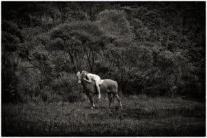 Portrait Photos - Auckland Photographer